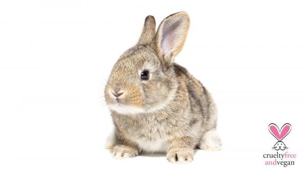 Diferencias entre Cruelty free ( libre de crueldad animal) o Vegan ( vegano)